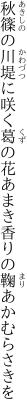 秋篠の川堤に咲く葛の花 あまき香りの鞠あかむらさきを