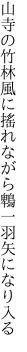 山寺の竹林風に搖れながら 鵯一羽矢になり入る