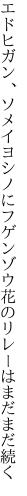 エドヒガン、ソメイヨシノにフゲンゾウ 花のリレーはまだまだ続く