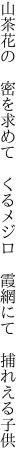 山茶花の 密を求めて くるメジロ  霞網にて 捕れえる子供